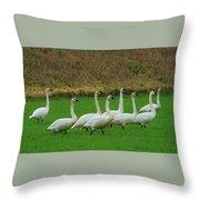 Eight Beautiful Swans Throw Pillow