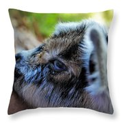 Eight Hours Old Throw Pillow