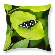 Eight Spotted Forester Throw Pillow