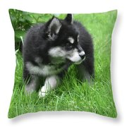 Eight Week Old Alusky Puppy On A Summer Day Throw Pillow