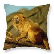El Paso Zoo - Golden Lion Tamarin Throw Pillow by Allen Sheffield
