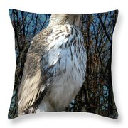 Elder Hawk Throw Pillow