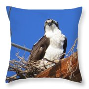 Electric Blue Osprey Throw Pillow