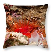 Electric Clam Throw Pillow