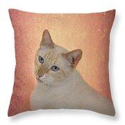 Elegant Flame Point Siamese Throw Pillow