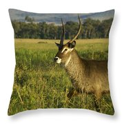 Elegant Guy Throw Pillow