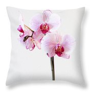 Elegant Orchid Throw Pillow