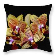 Elegant Orchid On Black Throw Pillow