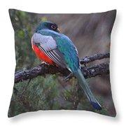 Elegant Trogon Throw Pillow