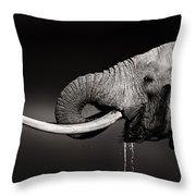 Elephant Bull Drinking Water - Duetone Throw Pillow