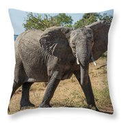 Elephant Crossing Dirt Track Facing Towards Camera Throw Pillow