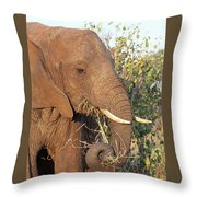 Elephant - Curled Trunk Throw Pillow