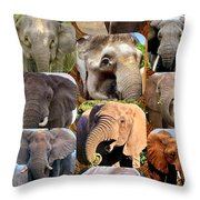 Elephant Faces Throw Pillow