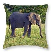 Elephant Feeding Throw Pillow