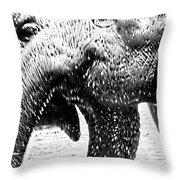 Elephant Gossip Throw Pillow