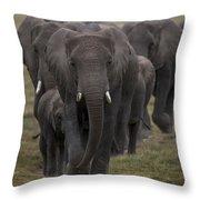 Elephant Herd Throw Pillow