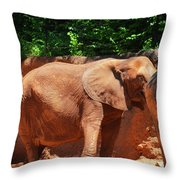 Elephant In Red Clay Throw Pillow