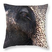 Elephant Throw Pillow by Jane Rix