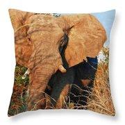 Elephant On Approach Throw Pillow