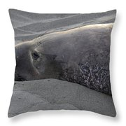 Elephant Seal 5 Throw Pillow