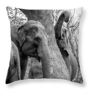 Elephant Tree Black And White  Throw Pillow