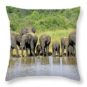 Elephants At The Waterhole   Throw Pillow