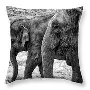 Elephants Bw Throw Pillow
