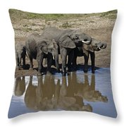 Elephants In The Mirror Throw Pillow
