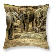 Elephants Social Throw Pillow