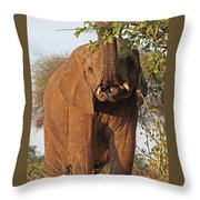 Elephant's Supper Time Throw Pillow