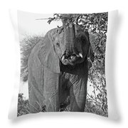 Elephant's Supper Time In Black And White Throw Pillow