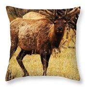 Elk #1 Throw Pillow