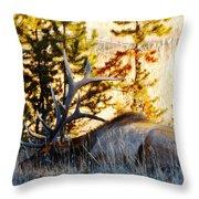 Elk Als Yellowstone Throw Pillow