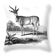 Elk Antelope Throw Pillow