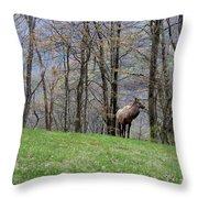 Elk, Blue Ridge Mountain Throw Pillow