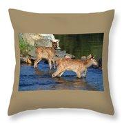 Elk Calf Crossing River 1 Throw Pillow