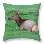 Elk Cow Throw Pillow