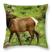 Elk Doe Throw Pillow