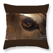 Elk Eye Close Up Throw Pillow