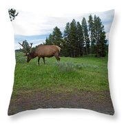 Elk Feeding Throw Pillow