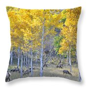 Elk In Rmnp Colorado Throw Pillow