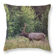 Elk In The Forest Throw Pillow