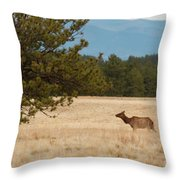 Elk In The Fossil Beds Throw Pillow
