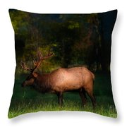Elk In The Smokies. Throw Pillow by Itai Minovitz