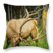 Elk In The Woods Throw Pillow