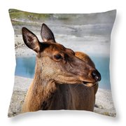 Elk In Yellowstone Throw Pillow