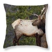 Elk Looking Back Throw Pillow