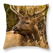Elk Raspberry For Tom Throw Pillow