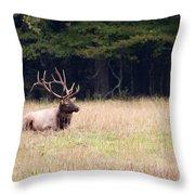 Elk Sitting Down Throw Pillow