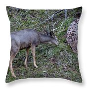 Elk With Antlers Throw Pillow